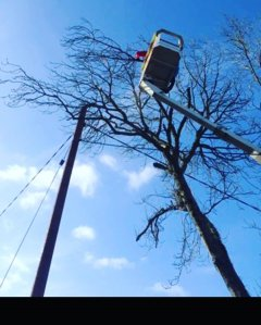 AJ Paine & Sons - Tree Surgeons of Devon, Totnes, Plymouth, Exeter & Torbay