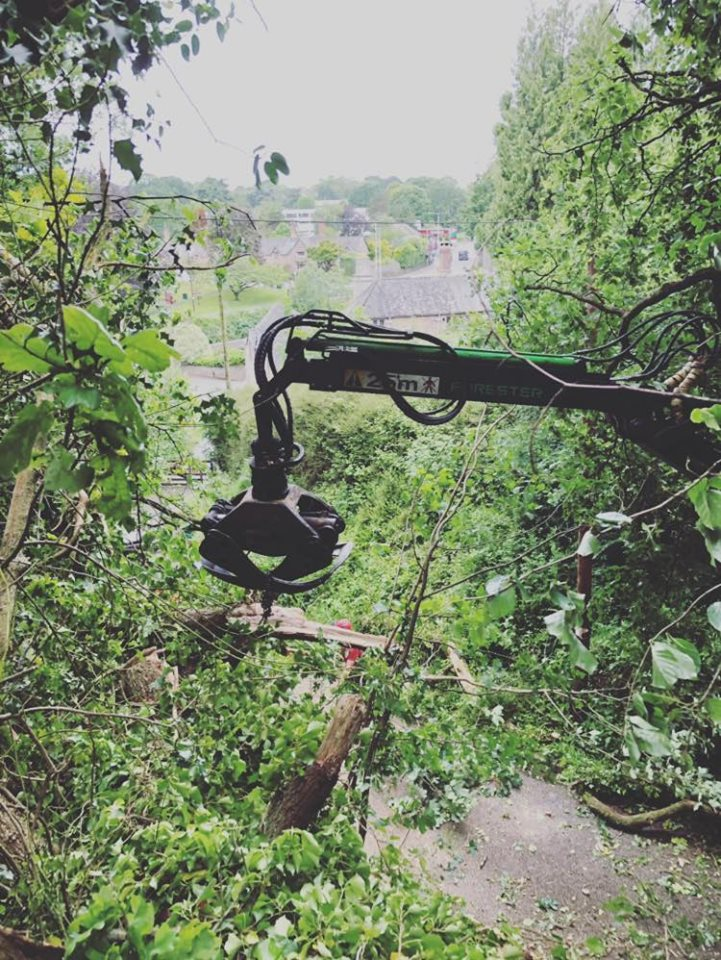 Tree Surgeon Dartington