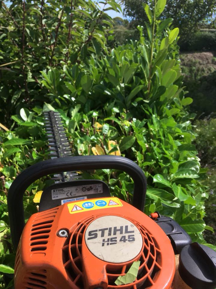 Tree Surgeons Blog - Hedge Maintenance in Strete