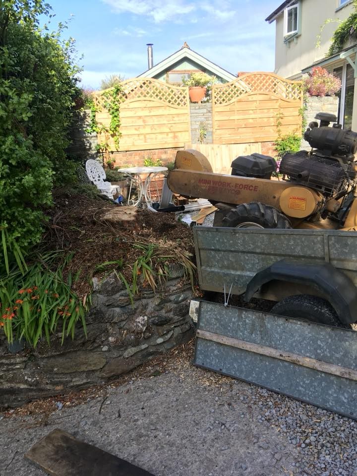Tree Surgeon - Stump Grinding in Harbertonford