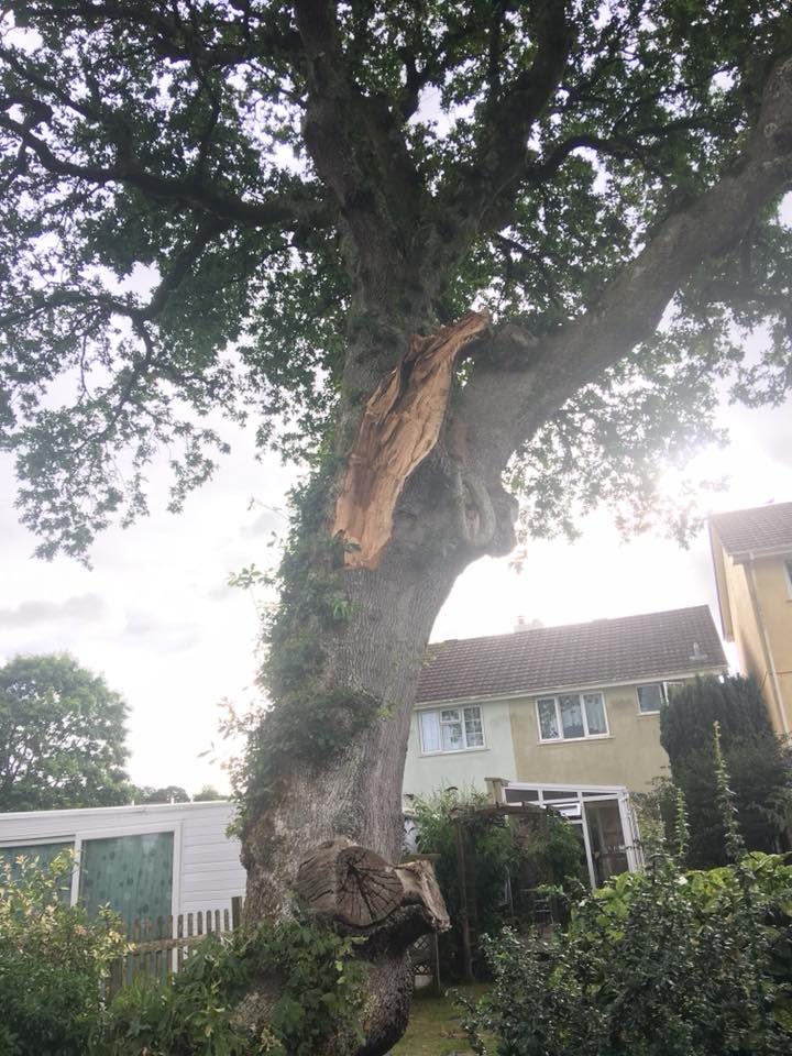 Tree Surgeon's Blog - Summer Branch Drop