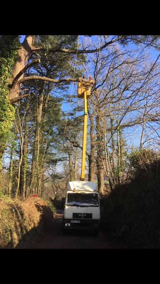 Tree Surgeon Totnes